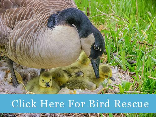 bird-rescue