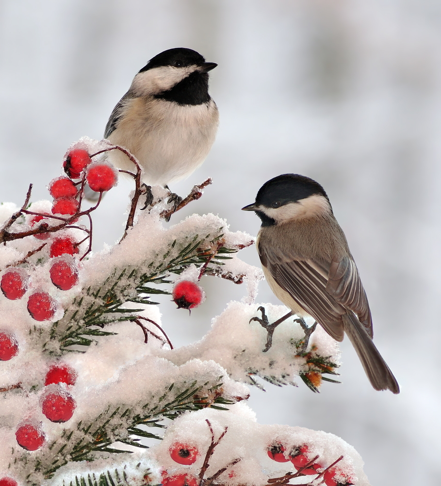 What are the wintering birds 64